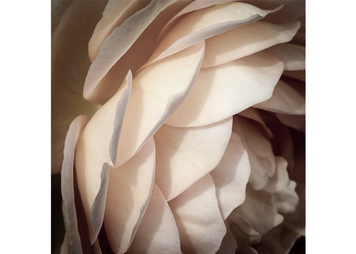 "Jennifer Baker - Rose | Inkjet Print | 27"" x 27"" 