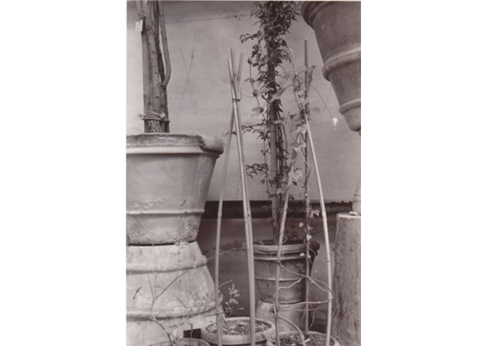 "Jean Bartlet - Clay Pots with Willow Supports | Selenium Toned Silver Prints | 14"" x 11"" 