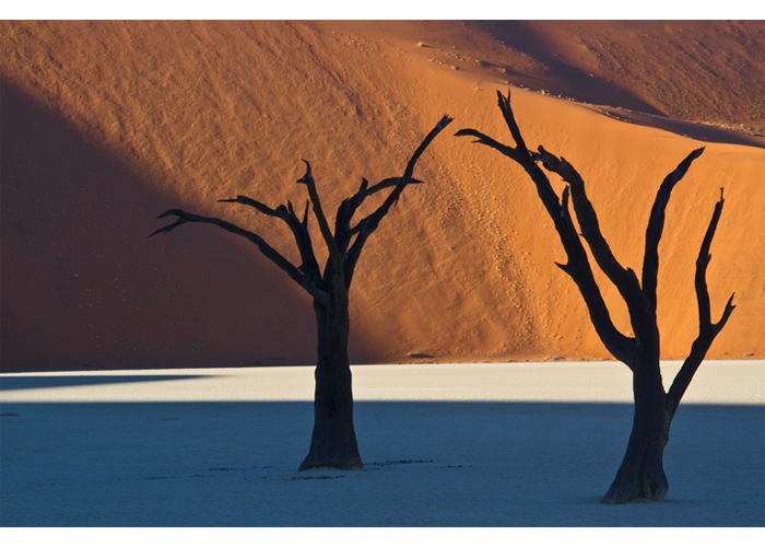 "Nancy Hopwood - Dead Tree Vliet Namibia | Photograph | 16"" x 20"" 