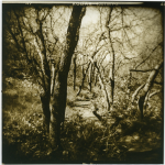 "Pam Guenzel - Forest Path 1 | Toned Gelatin Silver Print on Fiber | 12"" x 12"" 
