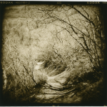 "Pam Guenzel - Forest Path 2 | Toned Gelatin Silver Print on Fiber | 12"" x 12"" 