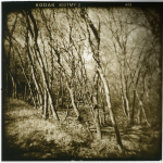 "Pam Guenzel - Forest Path 3 | Toned Gelatin Silver Print on Fiber | 12"" x 12"" 