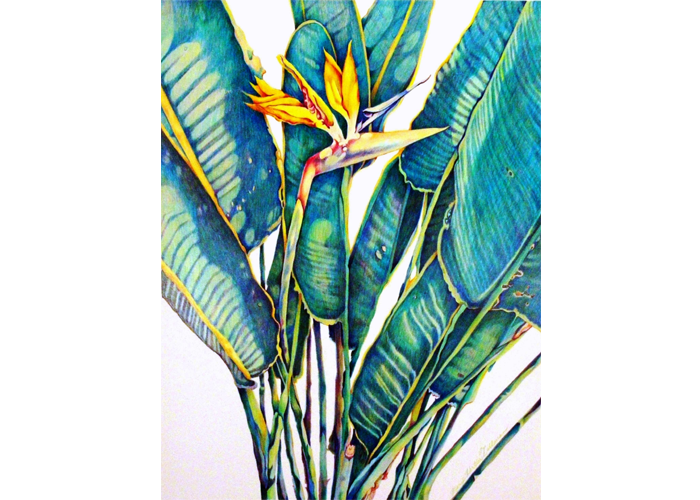 "Mary Tallman - Bird of Paradise | Color Pencil | 24"" x 30"" 